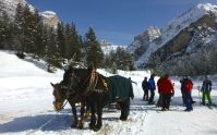 horses ready to tow skiers to a ski lift