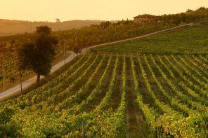 Azienda-agricola-Tenuta-di-Monaciano-Siena-5