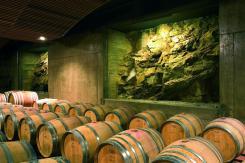 wine barrels in a row
